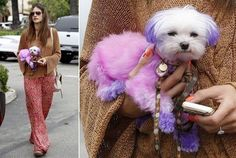Dip-Dyed Dogs