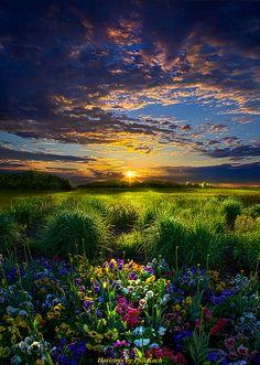 Let It Be, Meadow Sunrise by Phil Koch