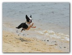 i can't even stand the cuteness of this passionate beach leap.