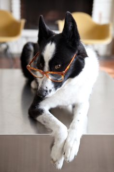 Dog with glasses :)