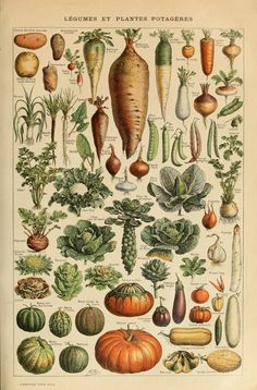 Potager poster