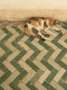 lounging kitteh