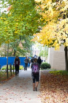 10/13/14 -- Walking to class by Paterno and Pattee Libraries is a colorful voyage in these fall colors on University Park campus, making Monday better.