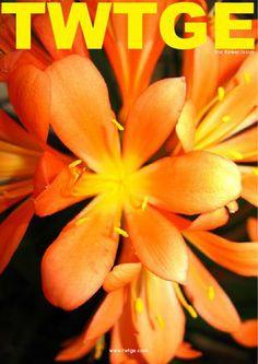 "TWTGE the flower issue  ""Flower Crown DIY""  a tutorial by Amanda Pulley"