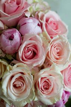 .HEART...... pale pink roses, gorgeous rose, flore, ana rosa, floral designs, flowers, garden, blush, beauti flower