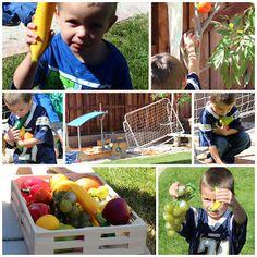 Creation Day 3: Fruits/Veggies Treasure Hunt