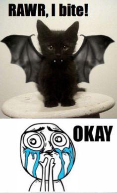 cats, god, halloween costumes, frames, bats