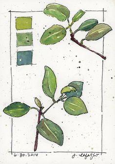 shades of green by janelafazio, via Flickr
