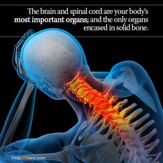 The brain controls every function of your body. The spine can interfere with this control if it isn't in alignment, the spinal cord is just an extension of the brain!