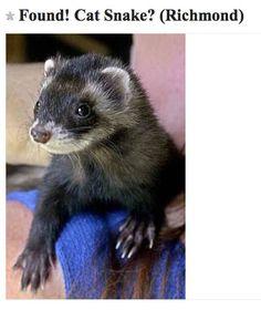 cat food, found cat snake, ferret humor