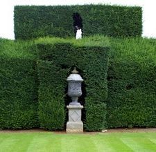 Yew Hedge, should plant these along the fence :P