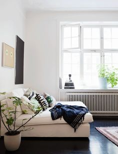 plant, comfy couches, interior, living rooms, floors, sofa beds, white lights, design blogs, live room