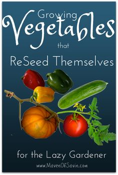 Growing Vegetables that ReSeed Themselves - shortcuts that save time for the lazy or beginner gardener!  Do you reseed any of your veggies? garden grow, growing vegetables, grow veget, beginners garden, beginn garden