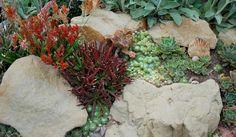 Succulents in rocks