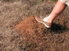 Kill Ant Mounds In The Yard!!