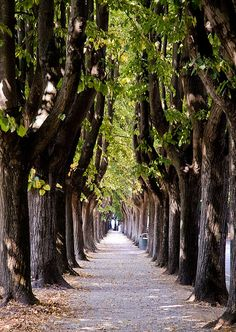 Lucca ~ Italy