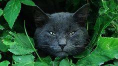 Urban Panther
