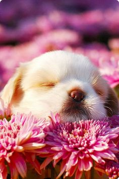 spring flowers, pink flowers, anim, little puppies, pet, happy puppy, puppy face, flower beds, dog