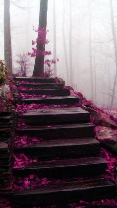 Mystical Stairs, Blue Ridge Mountains, North Carolina
