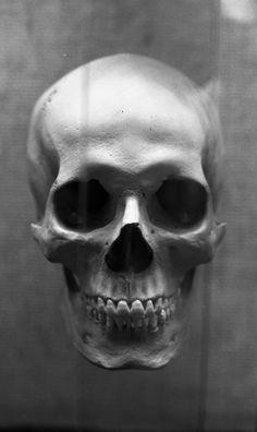 cool skull