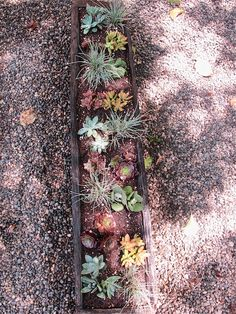 Reclaimed wooden planter filled with succulents @ www.mysoulfulhome.com