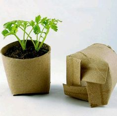 Recycling toilet paper rolls for seed starters: biodegradible too :)