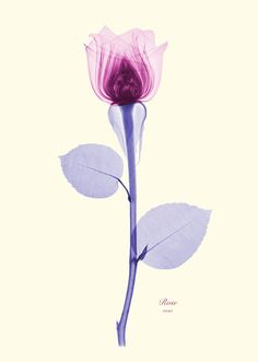 #Floral #X-Ray #Print - #Violet's room