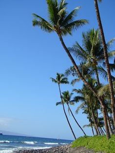 Fun things to do in Maui!    https://www.thegirlthattriesstuff.blogspot.com