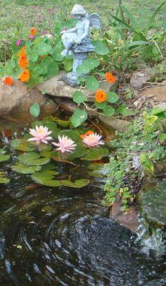 5 mistakes to avoid in backyard ponds | The Lazy Gardener | a Chron.com blog