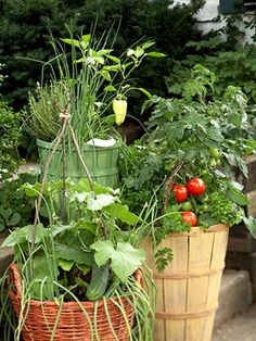 vegetable garden #unfaozhcgarden