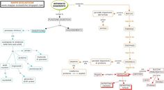 Mind Mapping Apps: applicazioni web e per dispositivi mobili