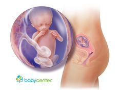 What your baby looks like at 14 weeks @babycenter