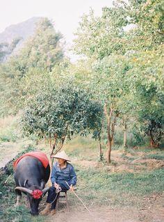 Guiling | Water buffalo & farmer | Photo by Jen Huang (jenhuangblog.com)