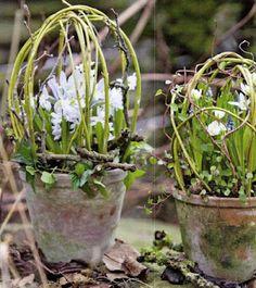 garden ideas, cur willow, flower