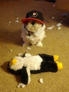 loyal hockey dog