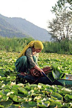 Kashmir Waterway , India