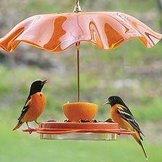 feeder !