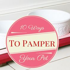 10 DIY ways to pamper your pet by re-purposing everyday items.