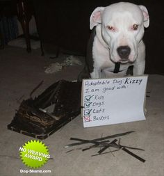 funny dog shaming