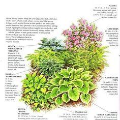 Shade garden - would love this under my HUGE tree! :-) outdoor garden, garden ideas, garden layouts, front yards, shade garden plants, gardens, hous, woodland garden, shade plants
