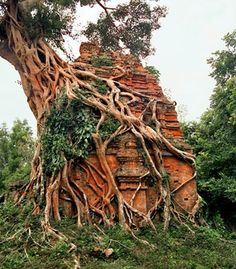 A tree grows from a structure at Sambor Prei Kuk, which has 52 ancient temples spread across a nearly three-square-mile swath of jungle in Cambodia's Kampong Thom province.  (Baldiri/Wikimedia Commons)