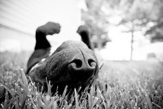 Dog nose//hey it is a upside down nosey..it still is a nose that knows ... Re-pinned by StoneArtUSA.com ~ affordable custom pet memorials since 2001