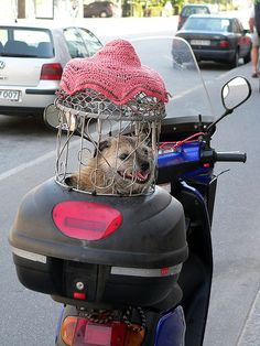 motorcycle-dogs