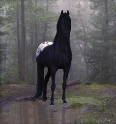 beauti hors, anim, dreams, black white, forest, black horses, blankets, beauty, appaloosa