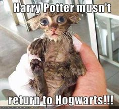 Dobby must warn Harry Potter! lol @Karen Morrow