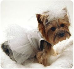 my dog will be in my wedding <3