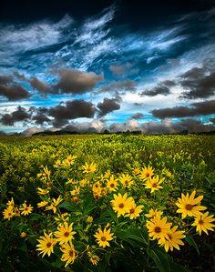 philkoch, wisconsin, solitud photograph, season, art prints, summer solitud, beauti, phil koch, flower