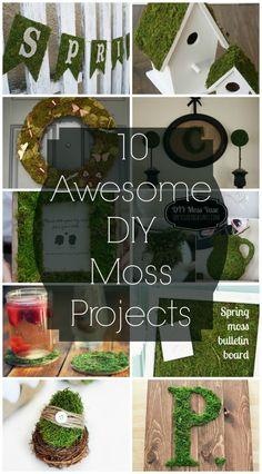 10 Awesome DIY Moss Projects @ adiamondinthestuff.com