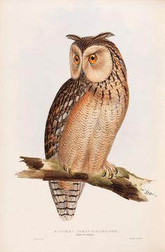Edward Lear, poet & scientific illustrator