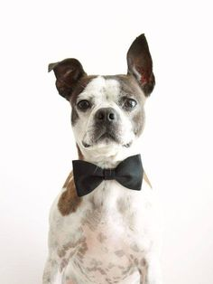 Happy National Dog Day to all of the dapper dogs out there!